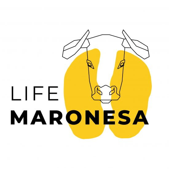 Life Maronesa Logo Design Brand 22 Creative Agency